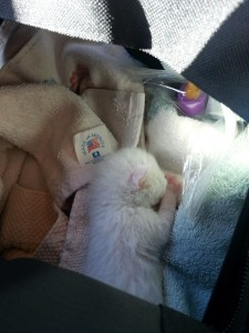 Nemo, in his carrier while in our truck. He would sleep the entire 2 hour drive on our first day.