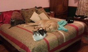 This photo is from 2011, but they all seem to commandeer our bed for most of the day.